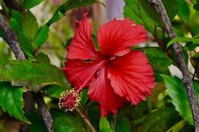 Cuban Flora
