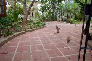 Cats of Havana