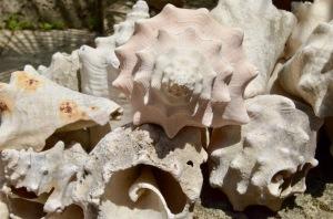 Lorenzo's shells 2