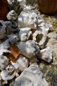 Lorenzo's shells in backyard