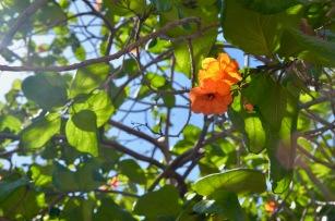 Callejon de Hamel flora