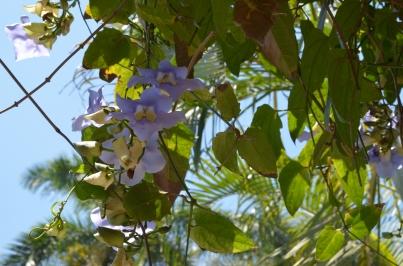 Finca Vigia 32 Purple flowers 2