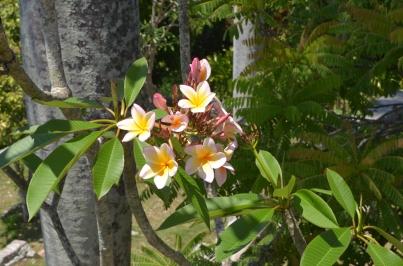 Finca Vigia 38 Flowers