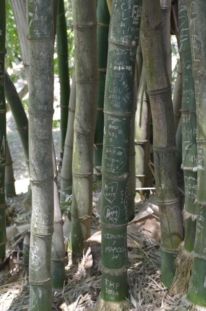 Finca Vigia 47 Bamboo vandals 1