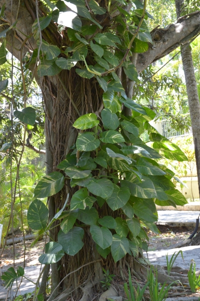 Finca Vigia 6 Tree